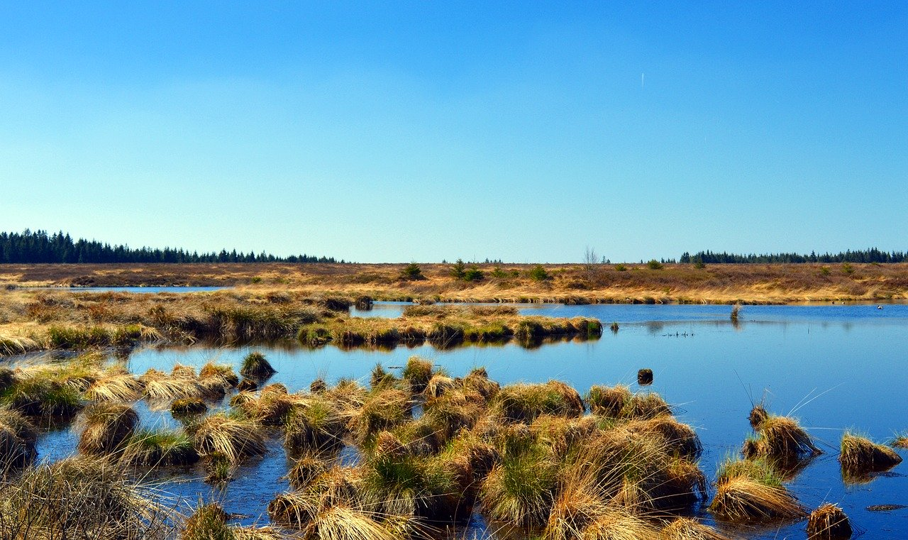 Peat-Free Compost   Help save peatlands and reduce flooding