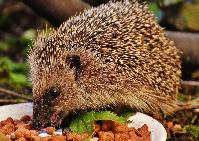 Get a birdbox, help a hedgehog   Give back to nature
