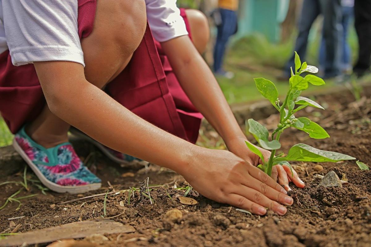 Plant a tree or two | Help capture CO2 emissions